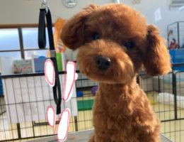 カムカム犬日記🐶